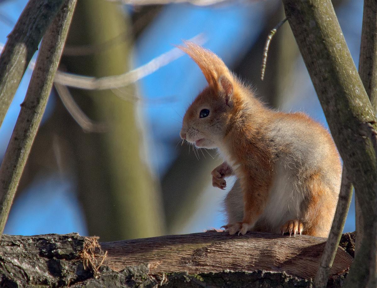 Mit csinál egy mókuskereskedő? Fantáziagyakorlatok az országos képességvizsgák apropóján
